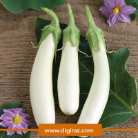 بذر بادمجان سفید قلمی آذر سبزینه