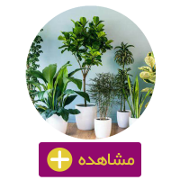 کود گیاهان آپارتمانی/خاک گلدان